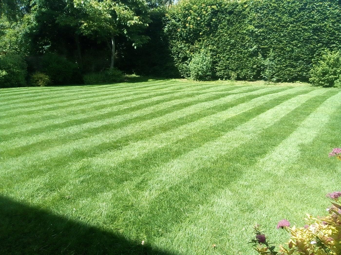Great British Lawns Customer Lawn