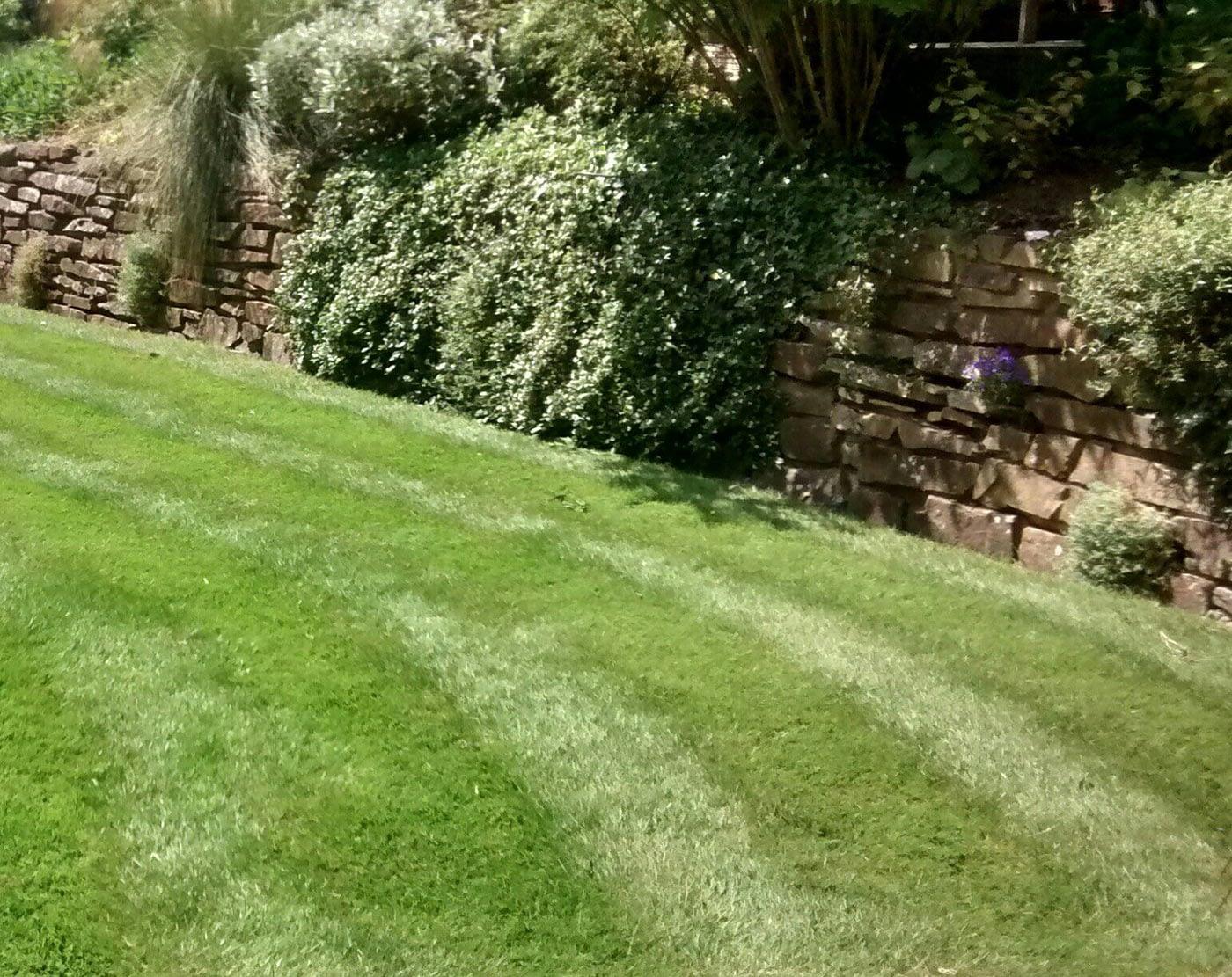 Great British Lawns customers Lawn