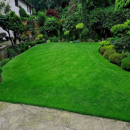 Great British Lawn pic 11