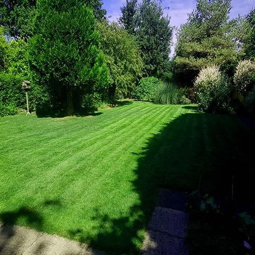 Great British Lawns customer lawns