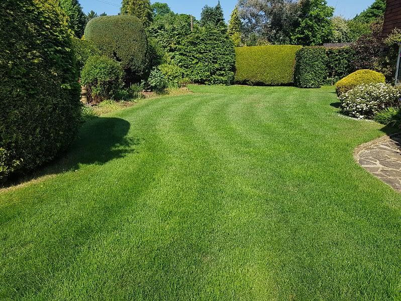 Great British Lawns customers Lawn 2