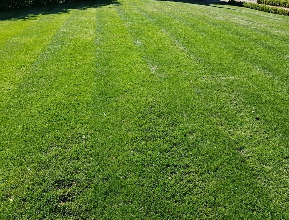 Great British Lawns Jpeg
